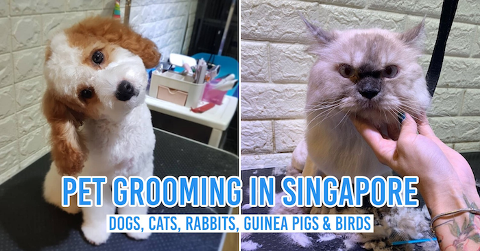 Pet grooming in Singapore