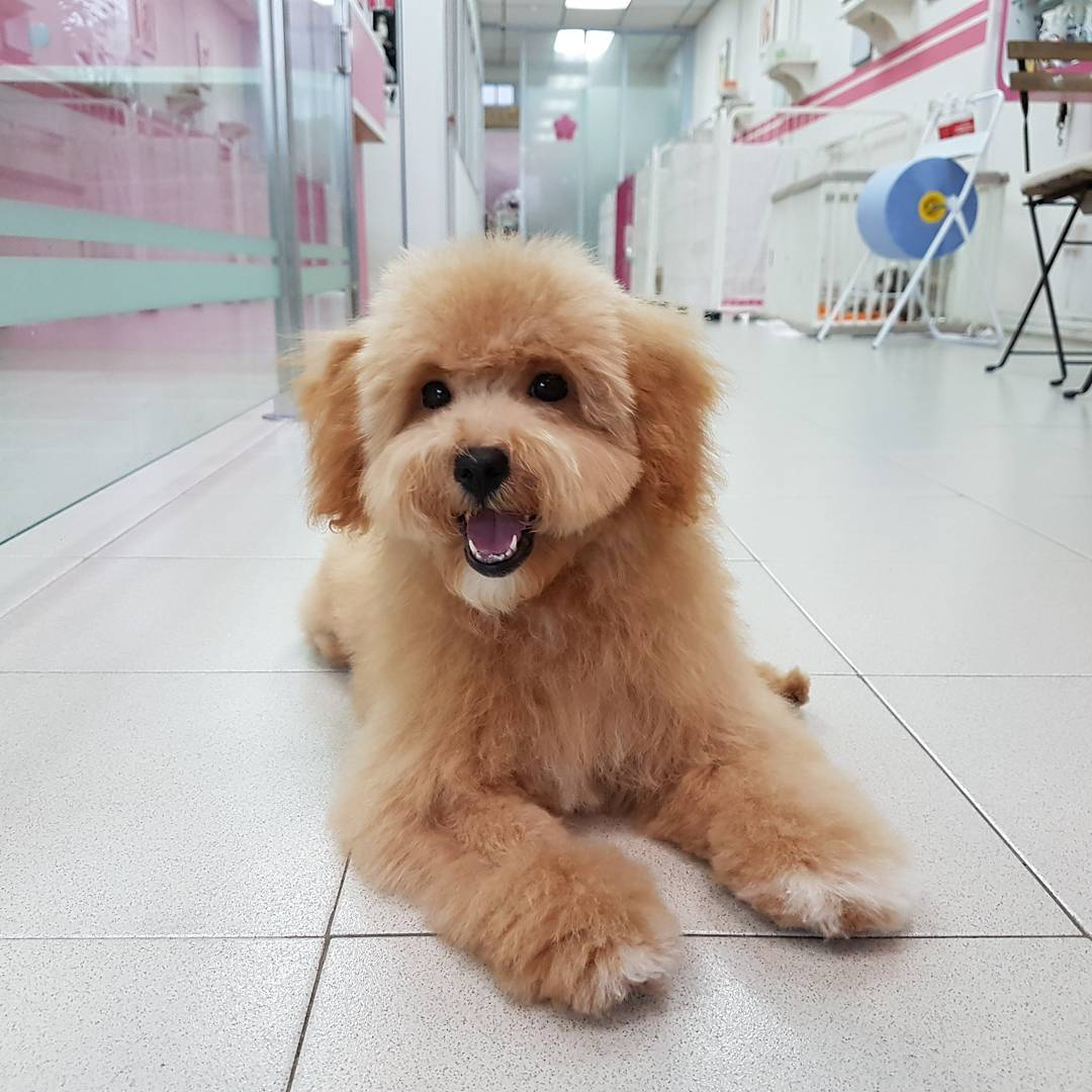 Pet grooming in Singapore - Pet Loft