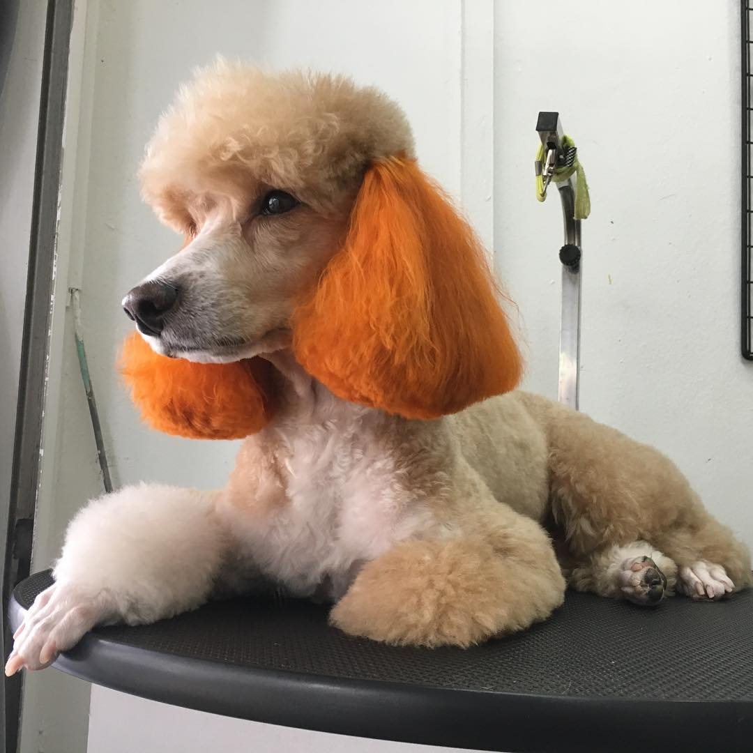 Pet grooming in Singapore - Le' Fur Pet Grooming Salon