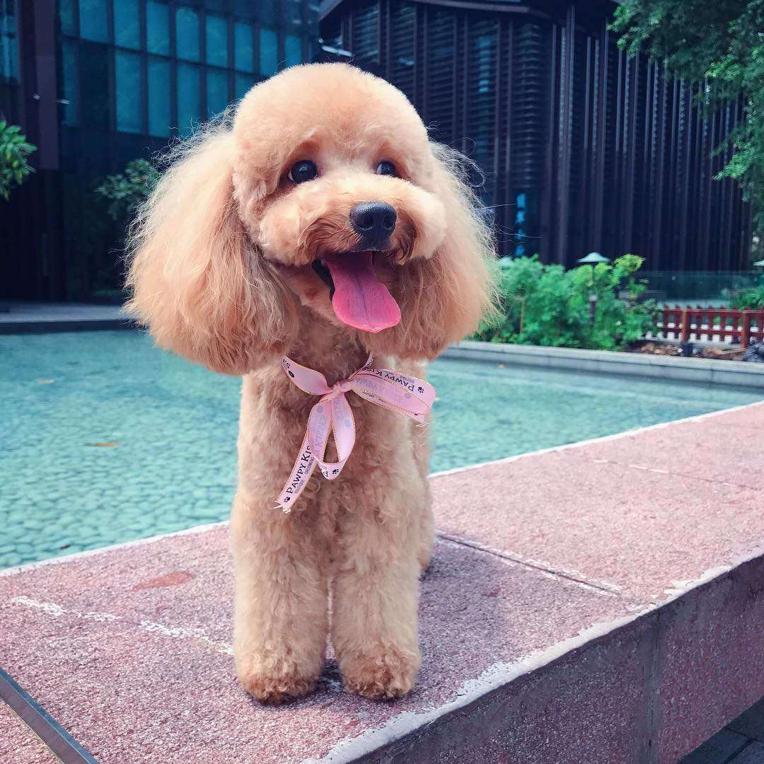Pet grooming in Singapore - Pawpy Kisses