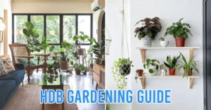 Urban Farming - A First-Timer's Guide To Starting Your Own Garden In A HDB Flat