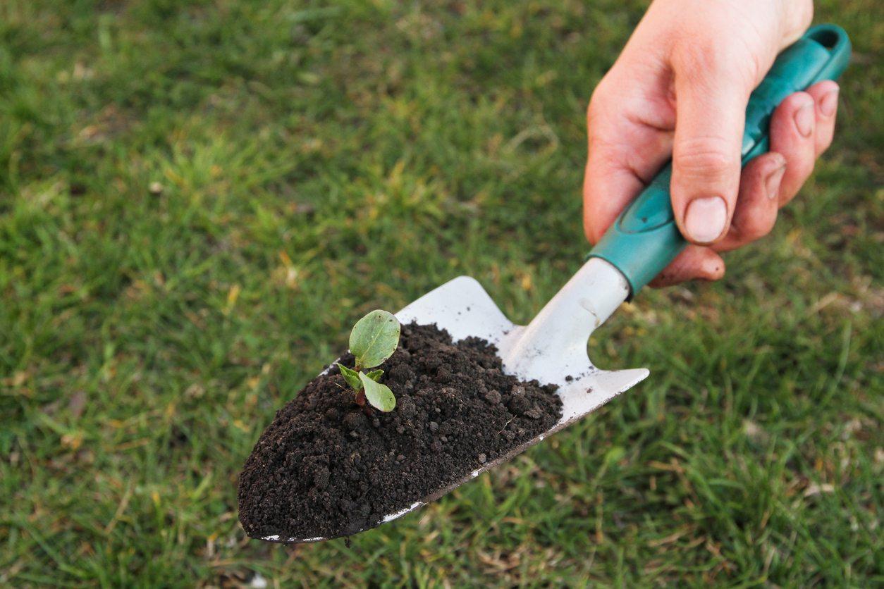 gardening trowel urban farming