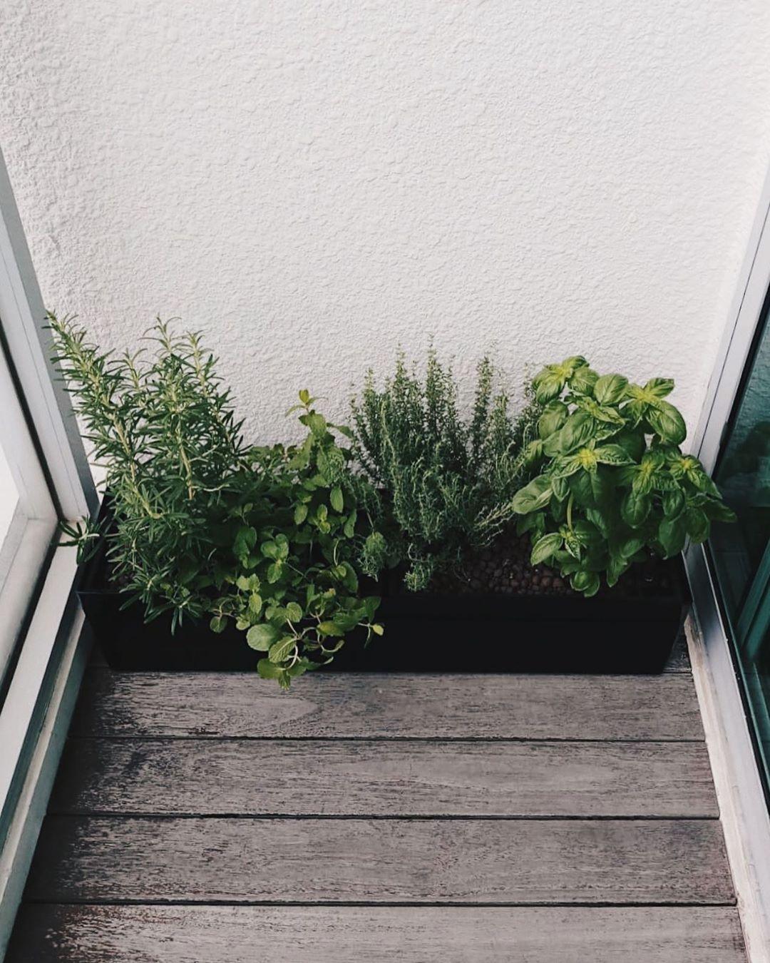 Herbs Urban Farming