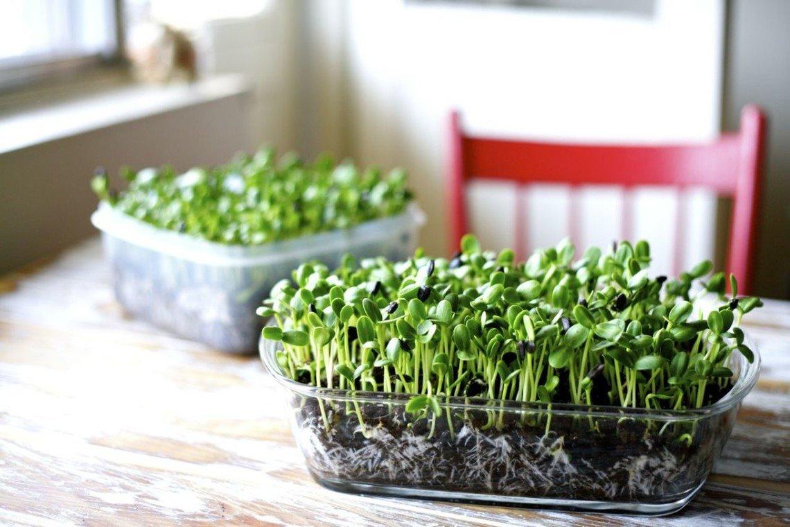 Micro Herbs Urban Farming