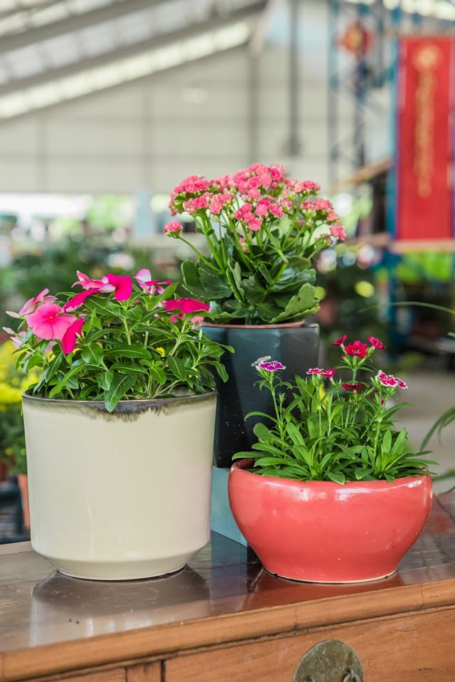 13 Plant Nurseries In Singapore For All