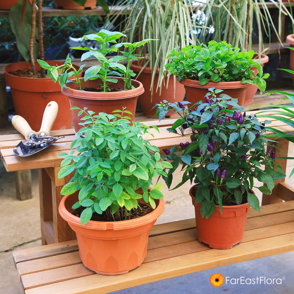 Far East Flora is one of the most popular plant nurseries in Singapore