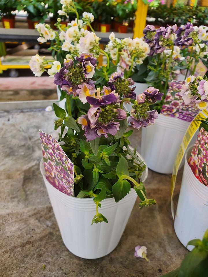 Bedok Garden & Landscape Pte Ltd nursery