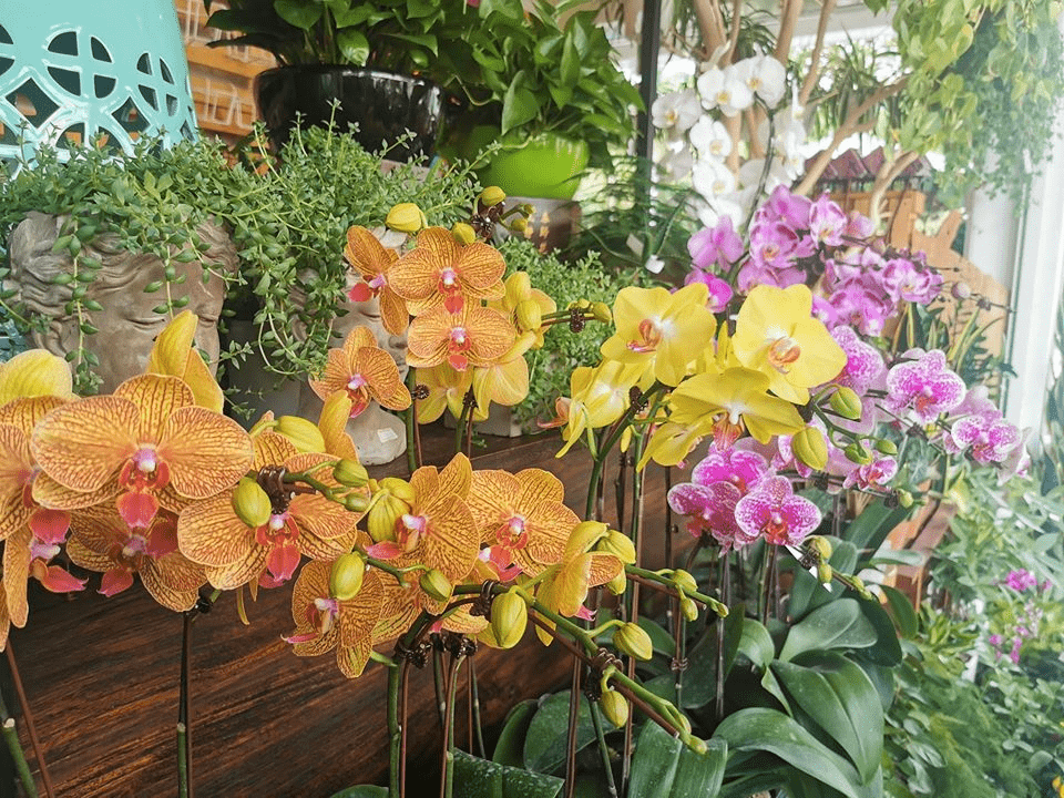 Plant nurseries like Chye Heng Orchid Garden offer a wide range of flowers and plants