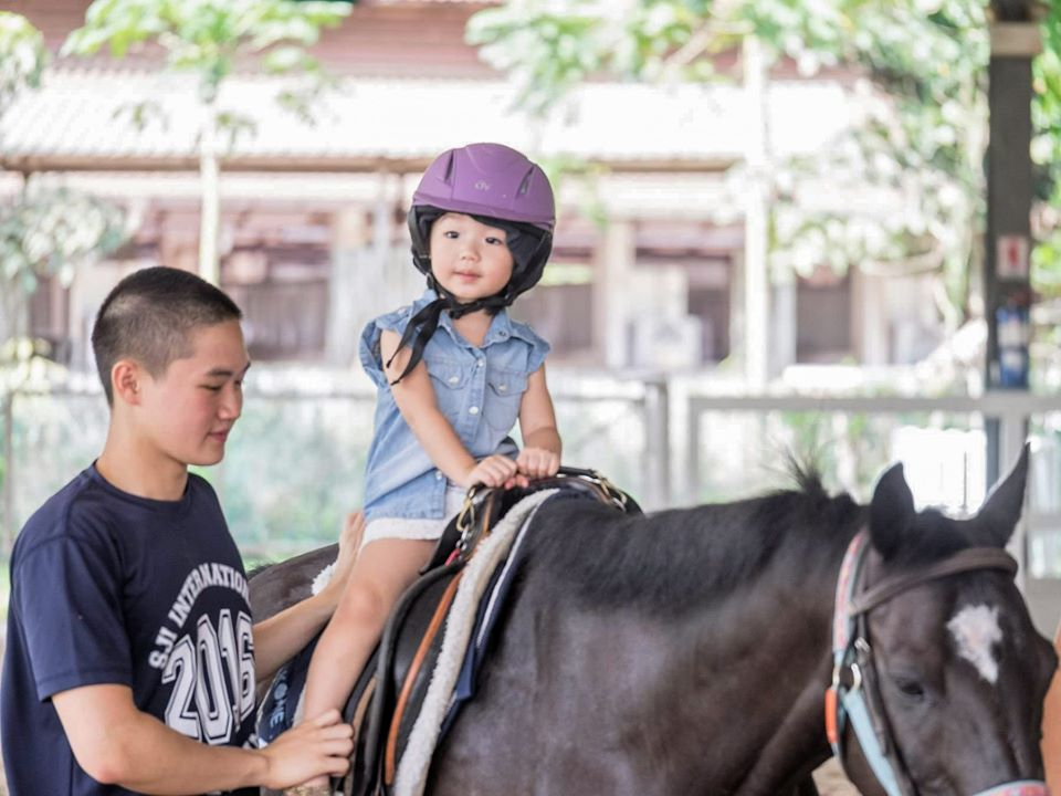 RDA Singapore is ideal for volunteers in Singapore who love horses