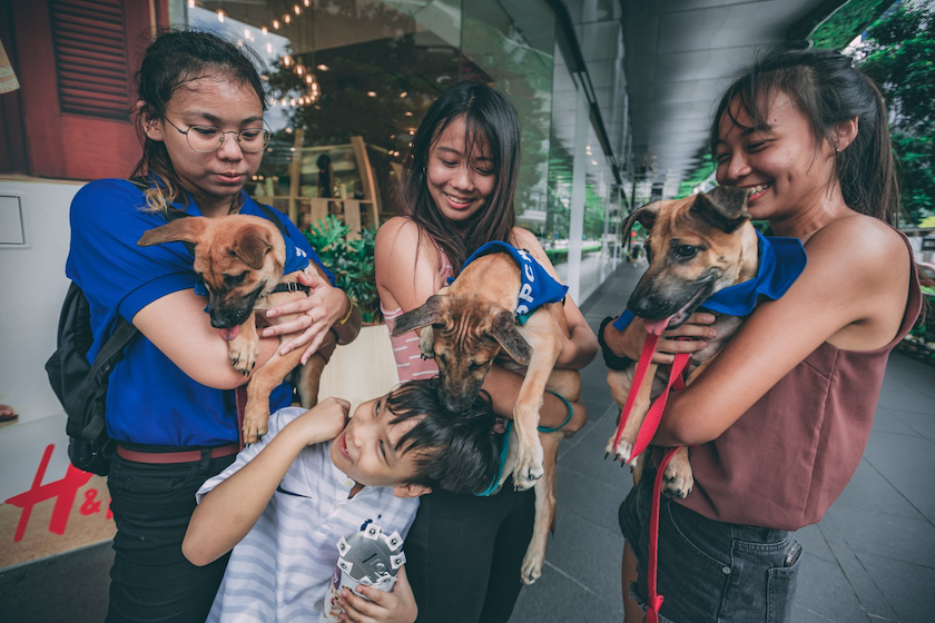 SPCA is one of the most popular places to volunteer in Singapore for animal lovers