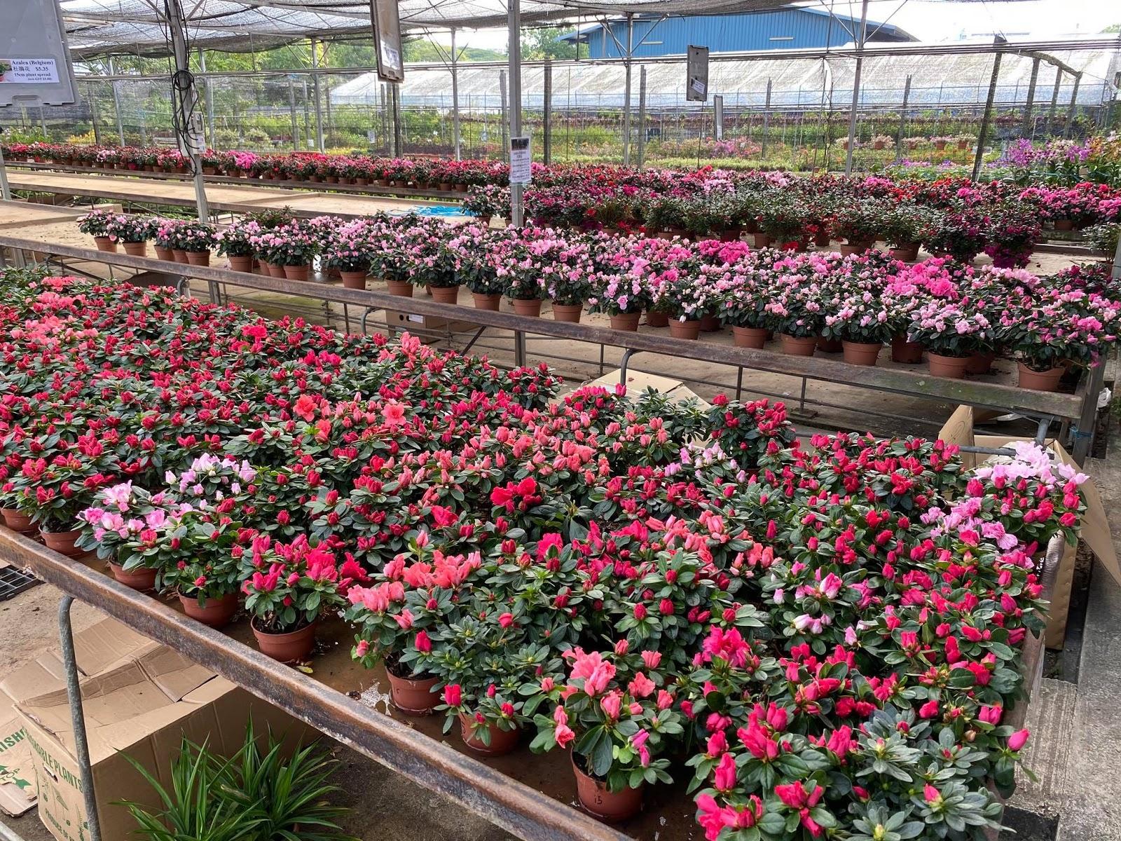 world farm plant nursery