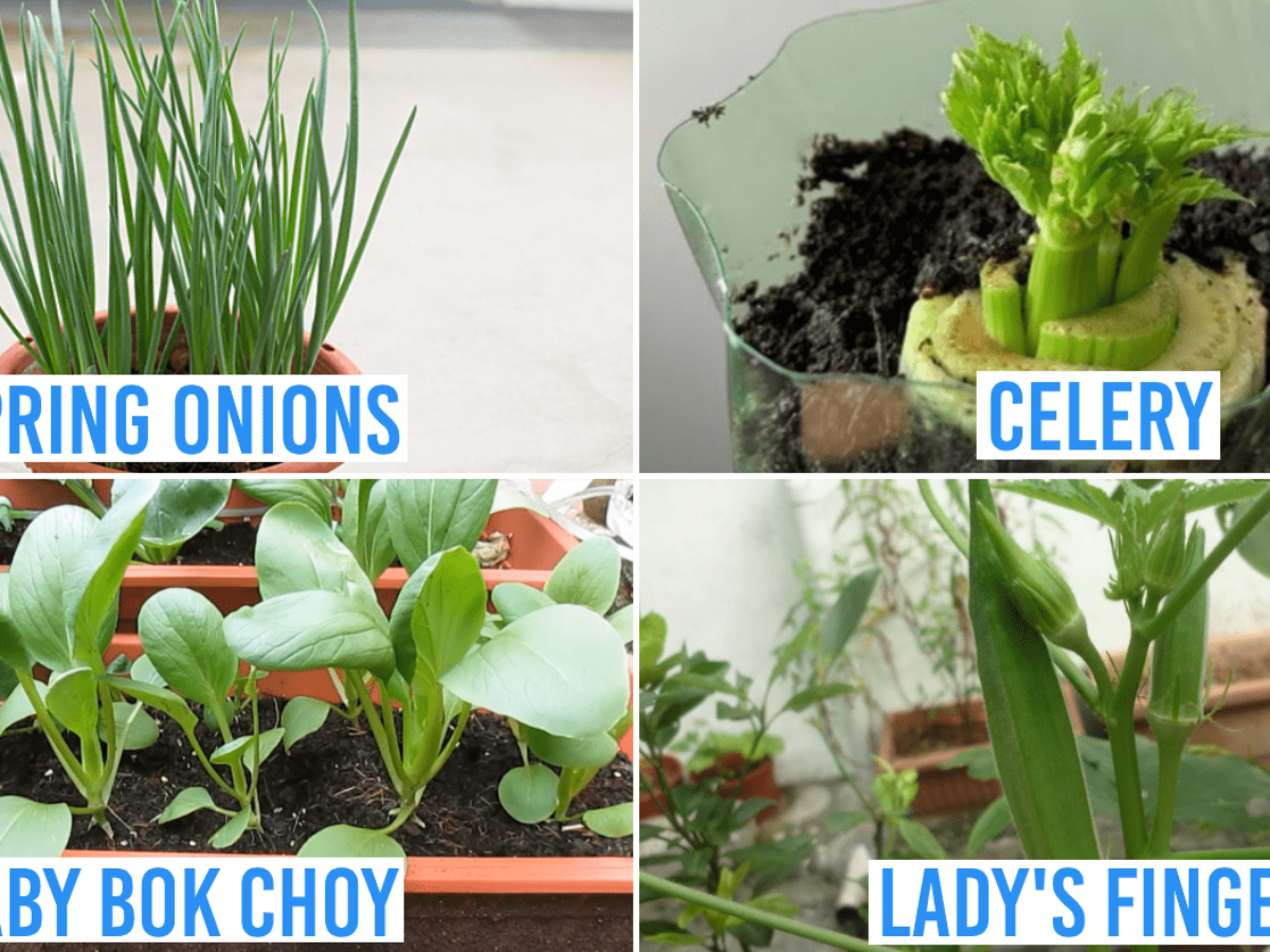 Growing Vegetables At Home Guide 8 Supermarket Greens To Be Self Sustainable In Covid 19 Times