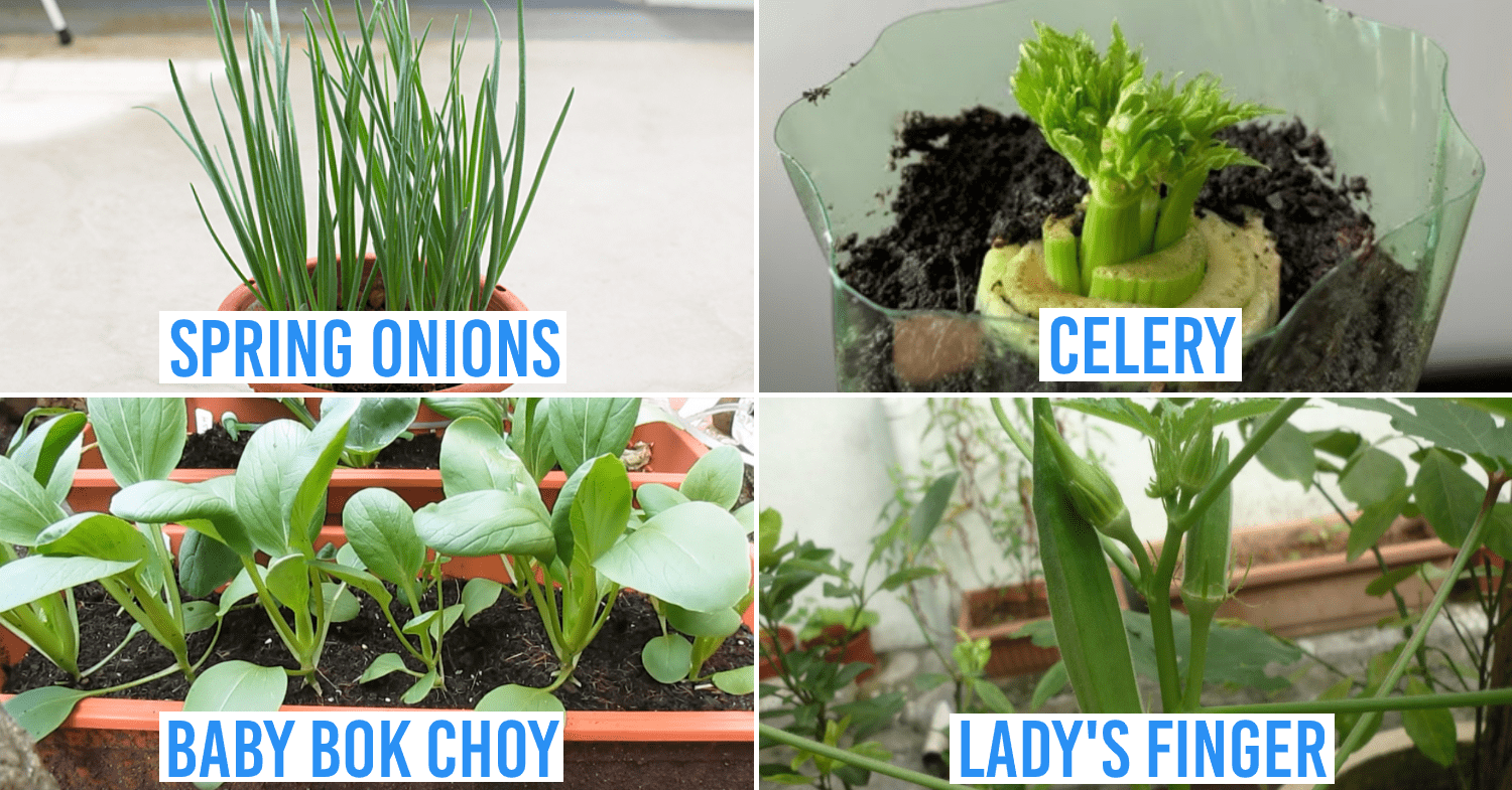 growing vegetables and herbs at home