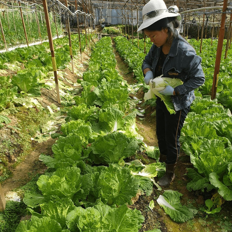 Quan Fa Organic Vegetables