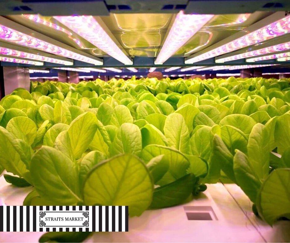Sustainable Farming (Straits Market)