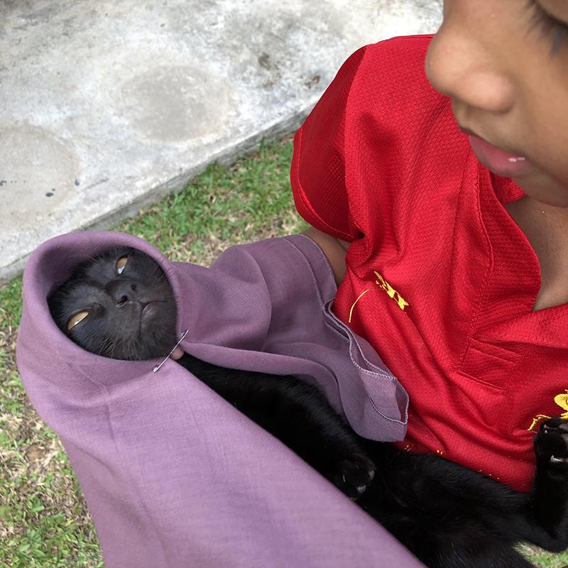 Kacau the cat, Malaysian Slang