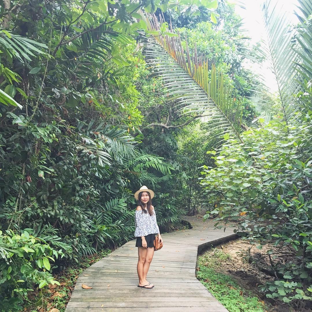 pasir ris mangrove
