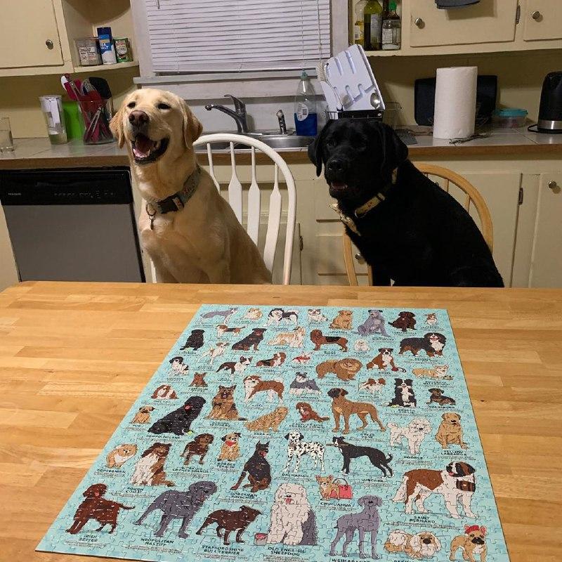 pet friendly puzzle