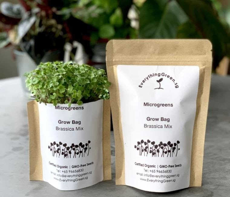 plant growing kits