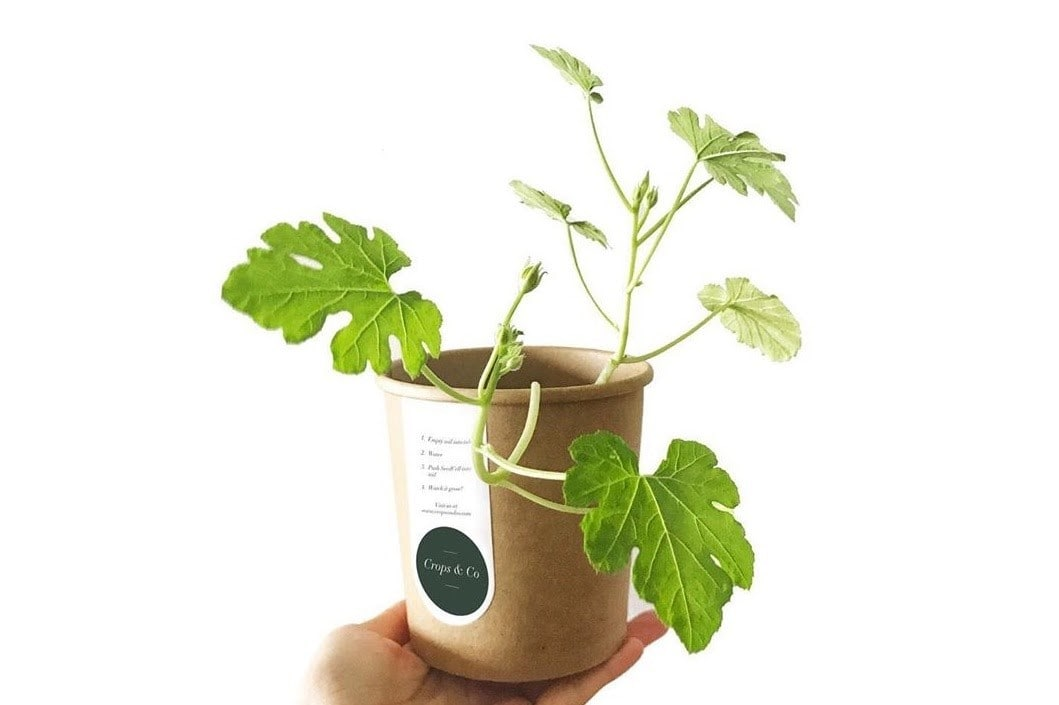 eco-friendly paper-potted plant