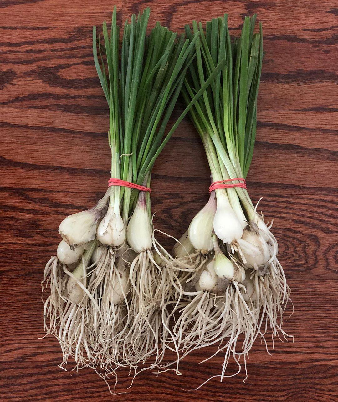 spring onions - longest lasting vegetables
