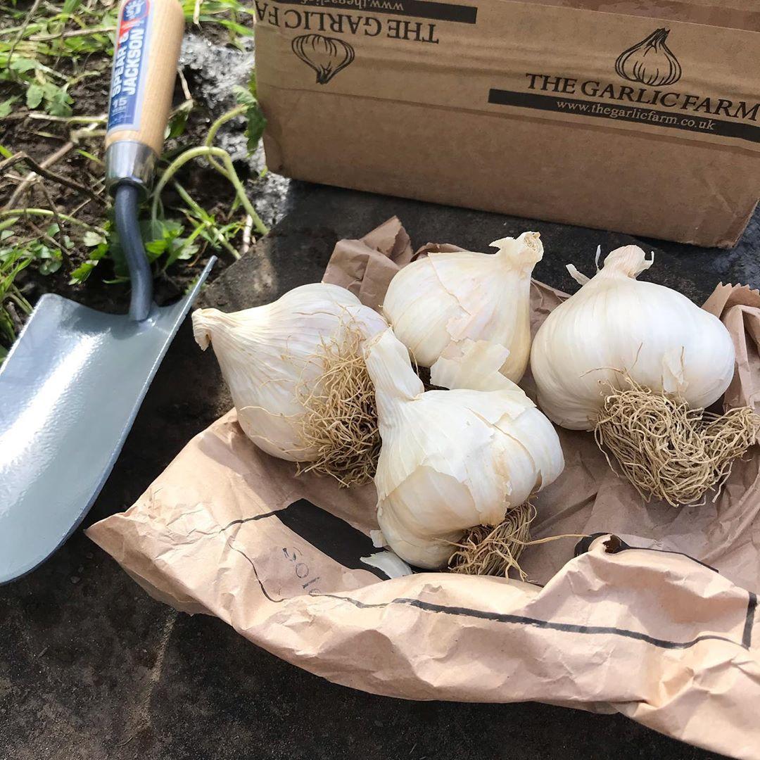 garlic - longest lasting vegetables