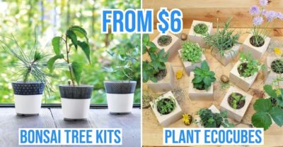 plant growing kits