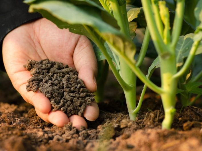 A common gardening mistake is using too much fertiliser for your plants.