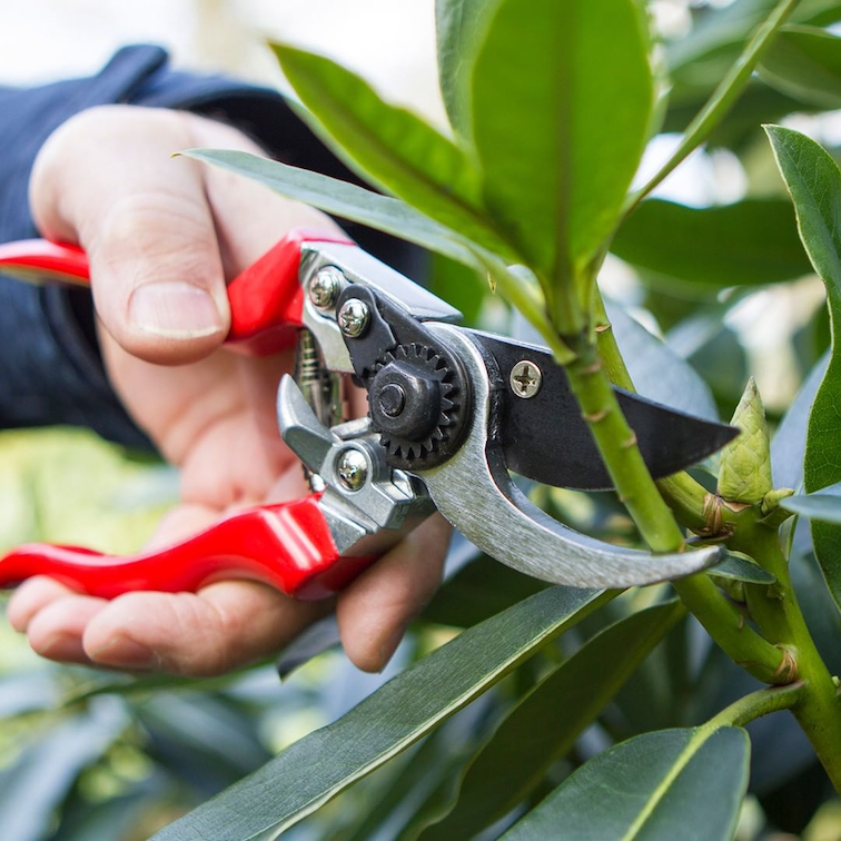 Pruning your plants will help it grow healthier.
