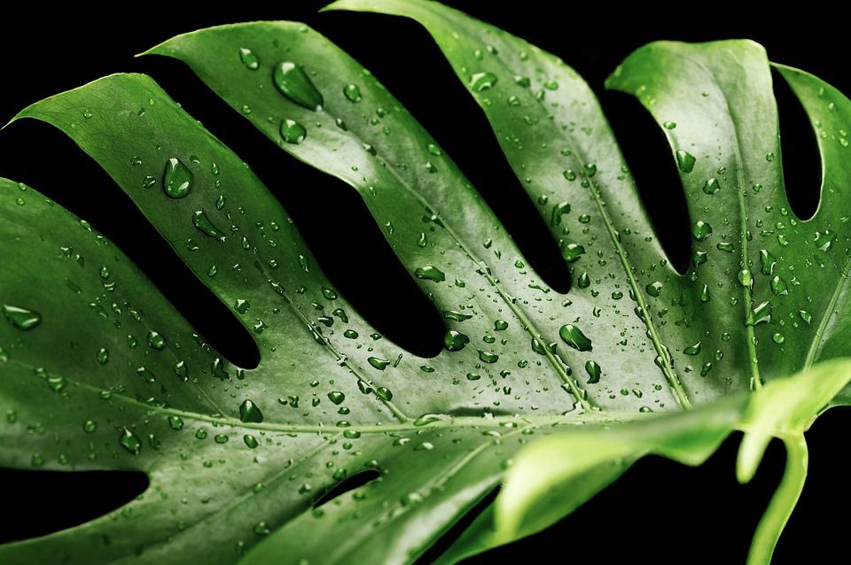 Water on the leaves is a gardening mistake that can lead to fungal infections that can harm your plant.