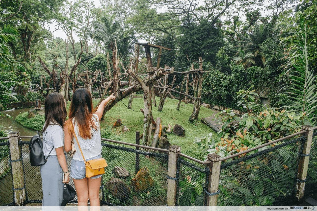 Singapore zoo phase 2 reopening