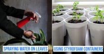 10 Gardening Mistakes To Avoid So Your Plants Don't Wither And Turn Yellow