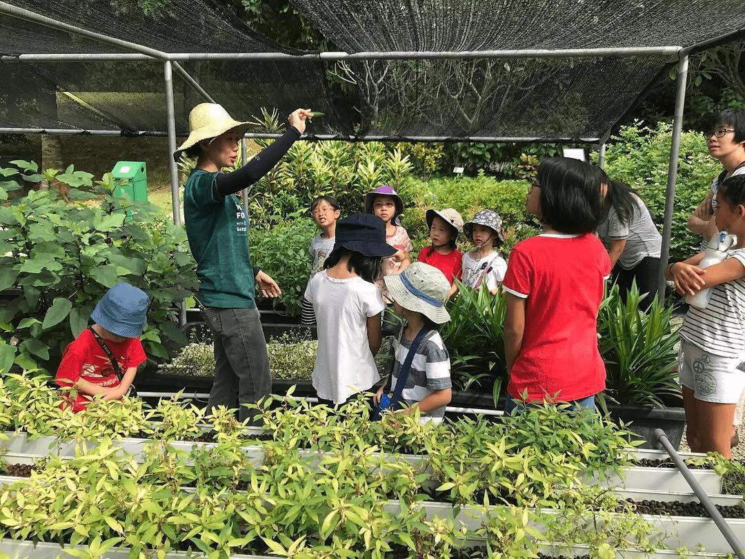 School Experiences in Singapore - Farm Excursion