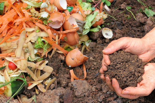 composting guide in Singapore - you can compost eggs and vegetable peels