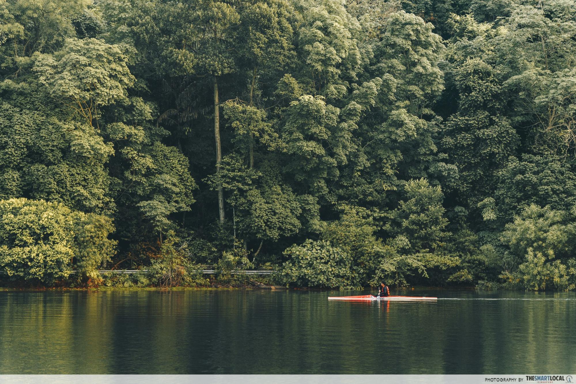 MacRitchie - kayaking