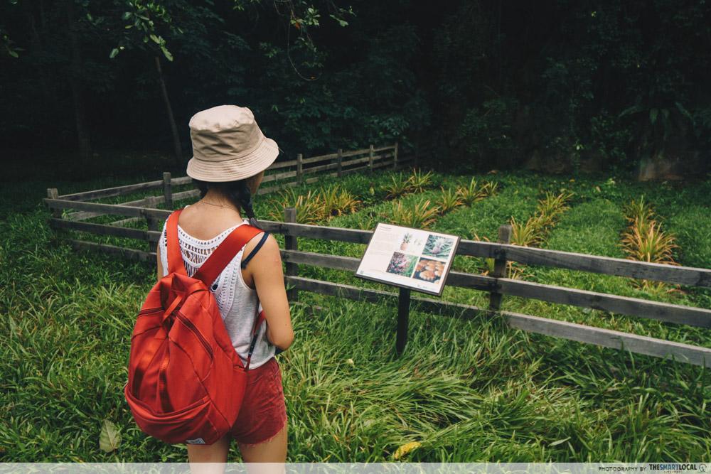 Pulau Ubin - Sensory Trail