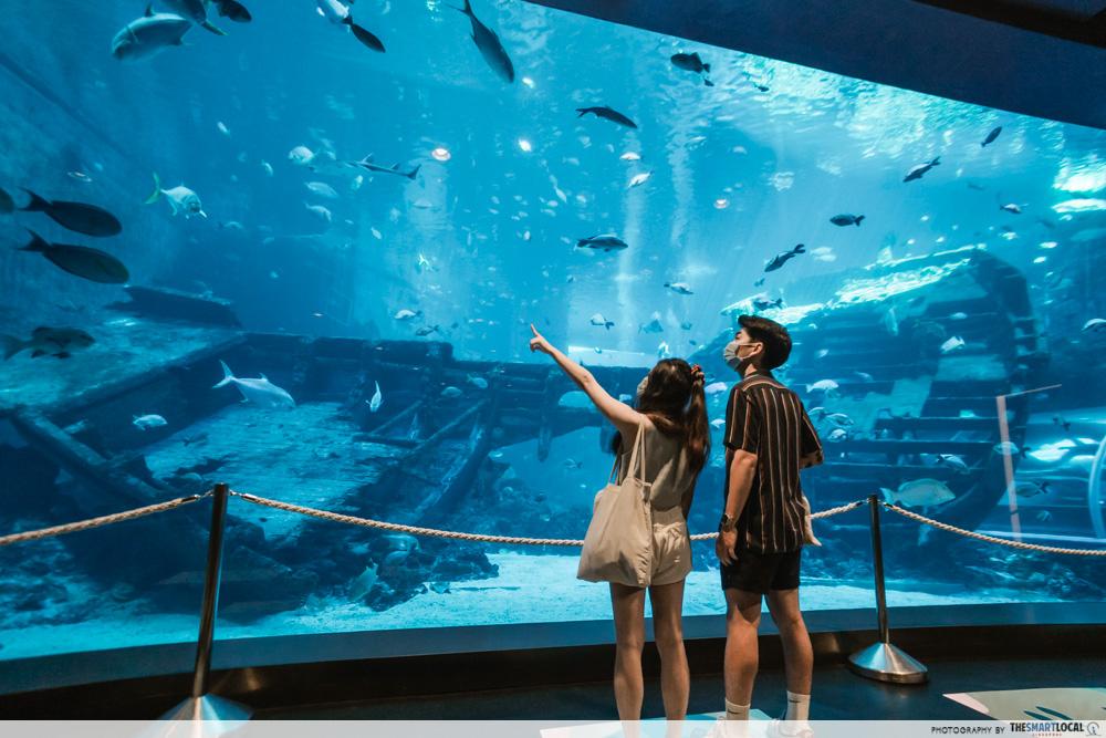 S.E.A. Aquarium - Shipwreck Habitat