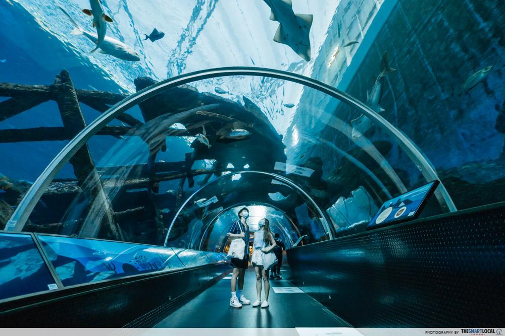 S.E.A. Aquarium - sharks seas habitat