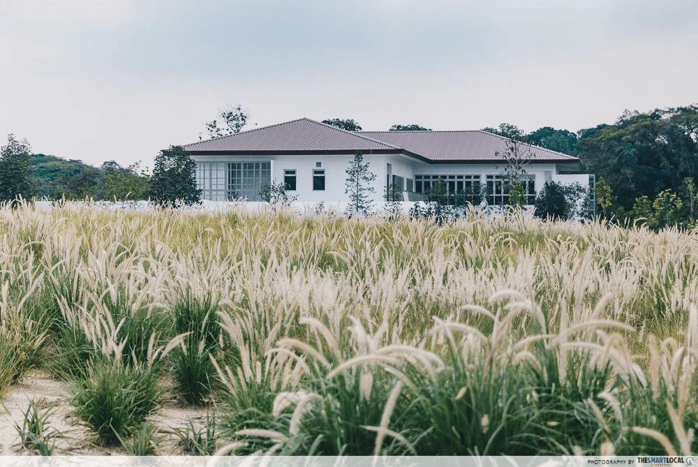 Singapore Road Trip Ideas - Jurong Lake Gardens Lalang Field