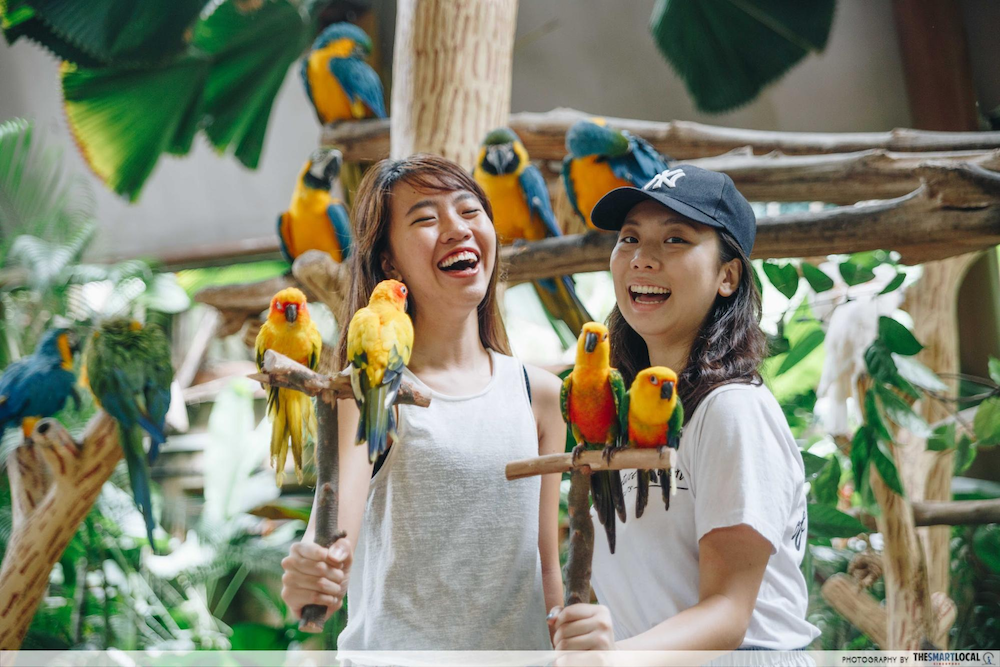 Visit the Zoo, Bird Park or River and Night Safari and enjoy 55% off the second ticket.