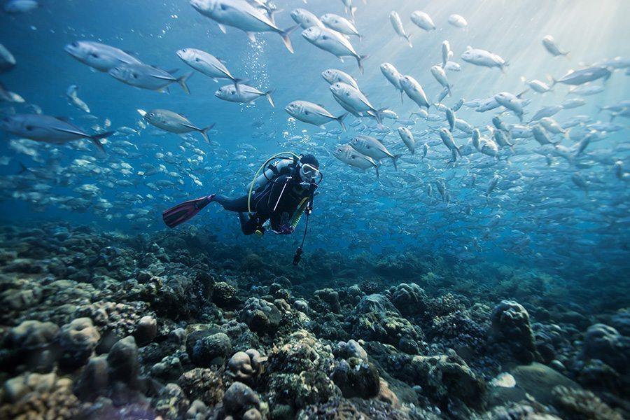 Deep Blue Scuba - open water diving