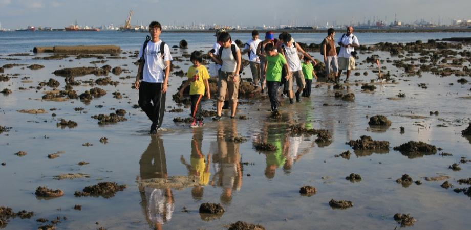 Enjoy an intertidal walk on Pulau Hantu.