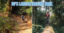 Chestnut Nature Park - Singapore's Largest Nature Park With Dedicated Hiking & Mountain Biking Trails