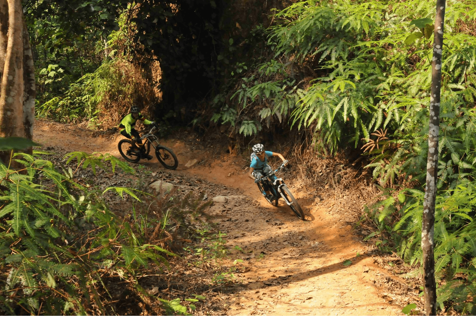 Mountain biking trails at chestnut nature park