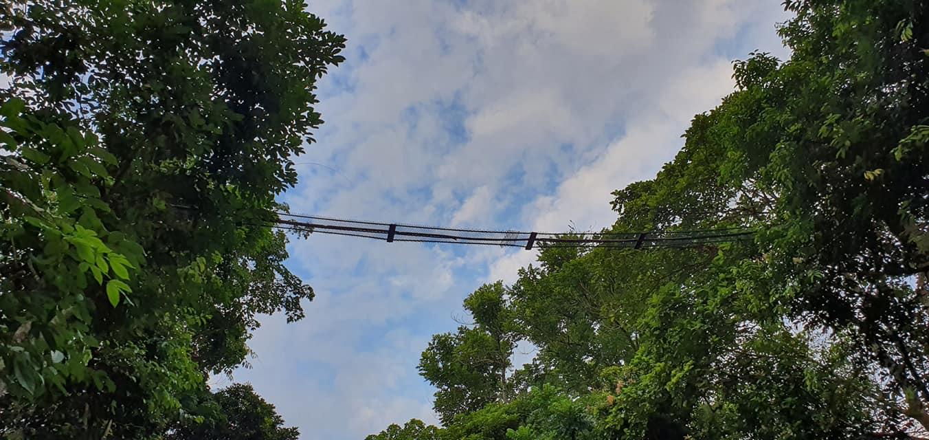 aerial rope bridge, thomson nature park