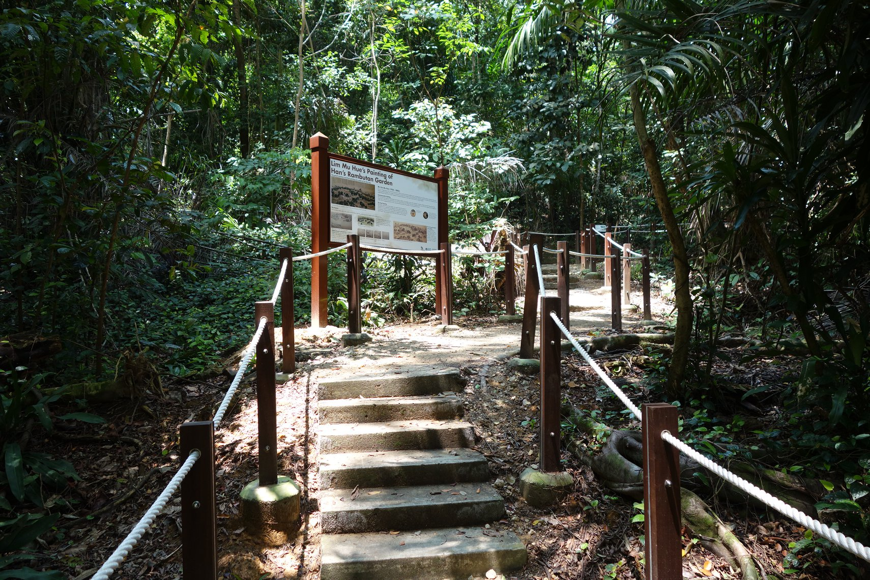 rambutan trail, thomson nature park