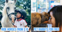 9 Day Trip Ideas In Singapore For Animal Lovers, Besides The Zoo & Night Safari