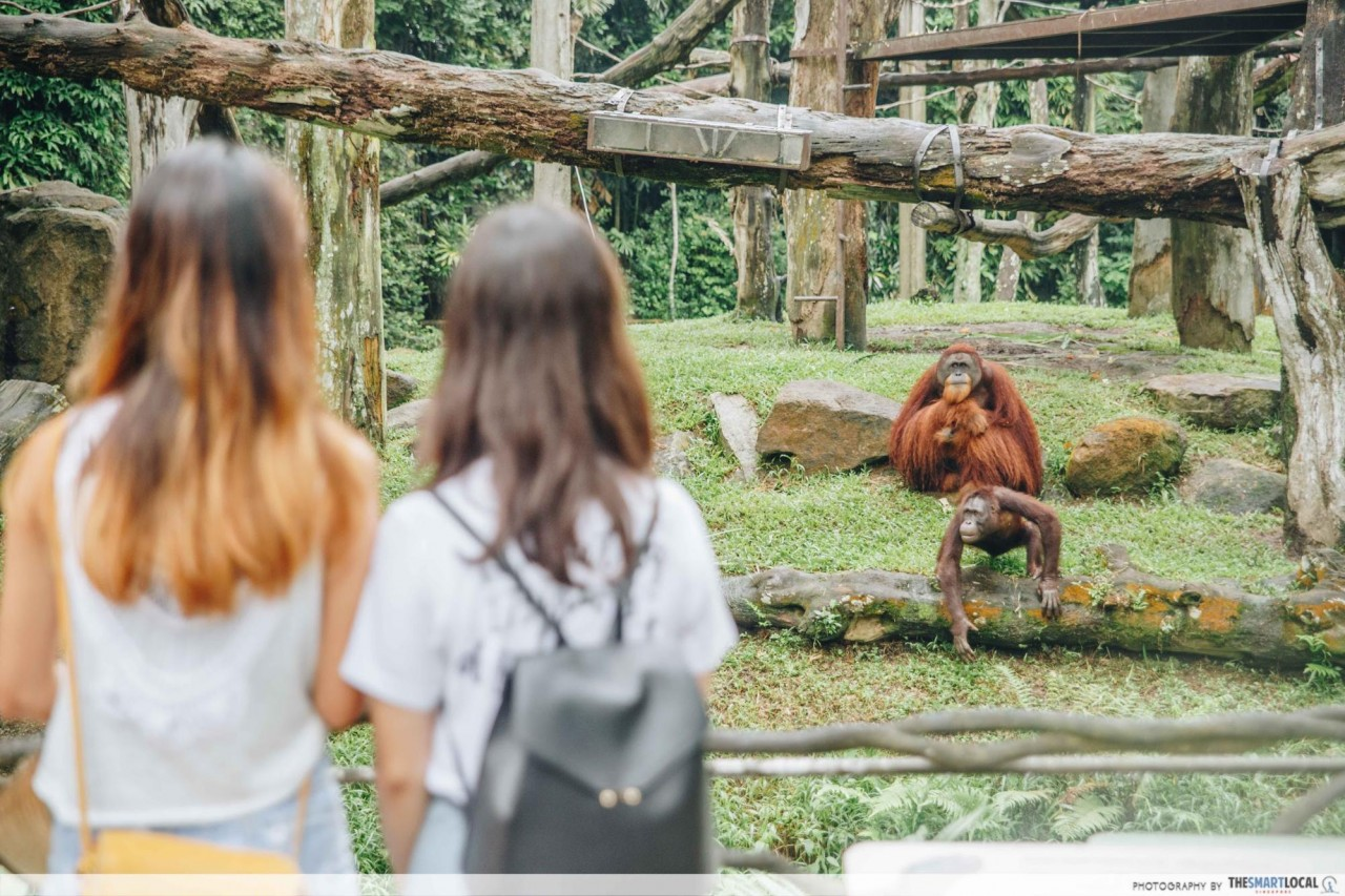 Guided tour on orangutans