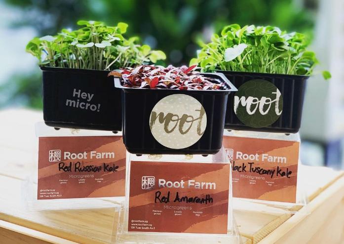 root farm, assisi fun day 2020