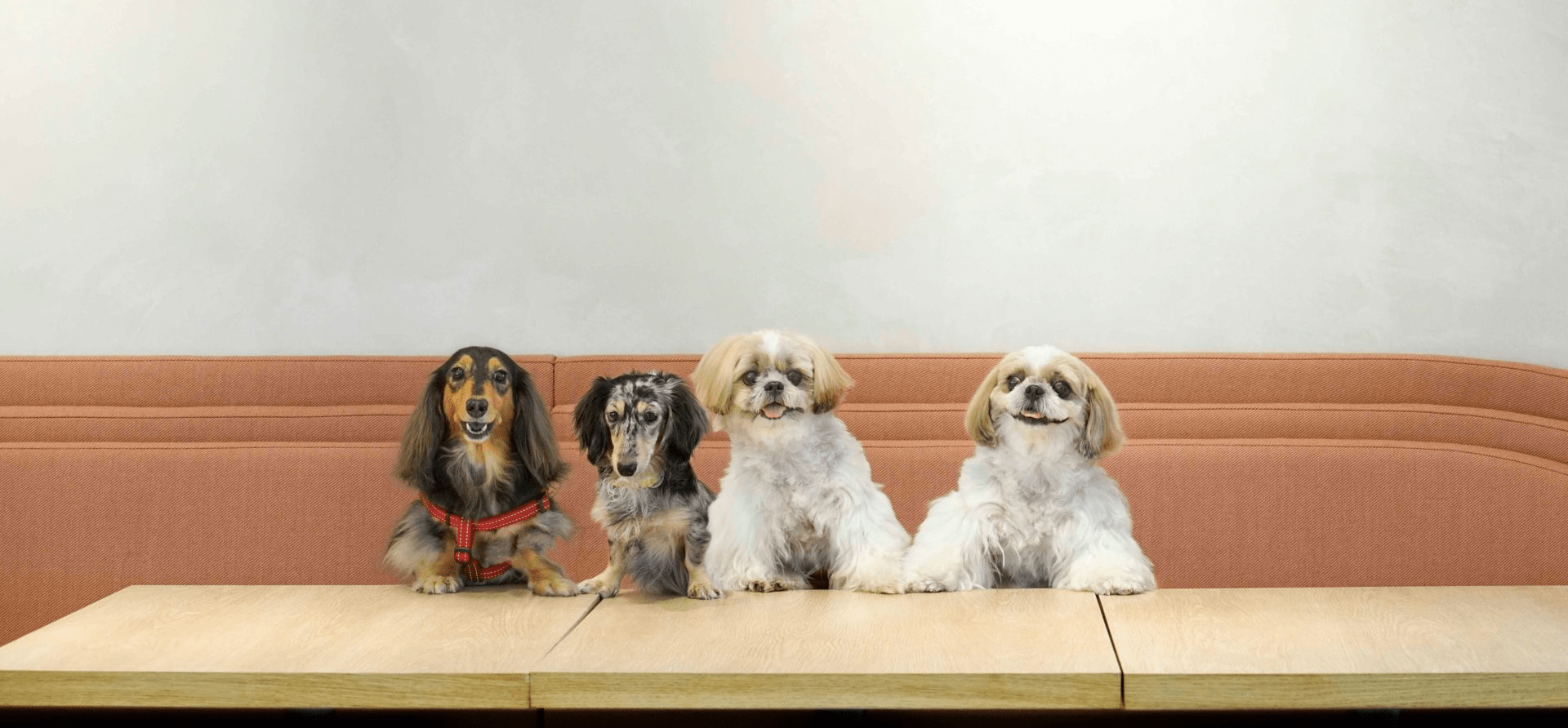 gather cowork pet-friendly, workspaces in singapore